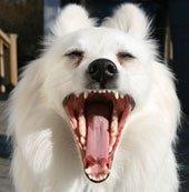 7 вопросов о зубном камне