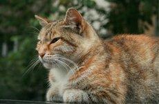 Причины заболеваний кошек