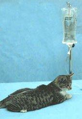 Опухоли молочной железы. Мастит у собак и кошек.