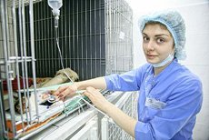 Новый стационар и отдельный блок реанимации для тяжелых пациентов в ВЦ ЗООВЕТ
