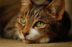 Дерматофития. Лечение лишая у собак и кошек