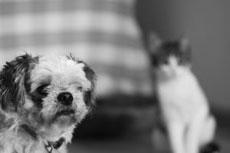 У собак и кошек чёрно-белое зрение