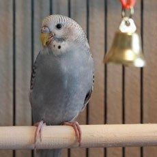 Берегите попугая,   эта птичка дорогая. О лечении птиц.