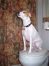Туалет дома. Плюсы и минусы