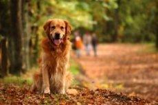 Как подготовить собаку к осени