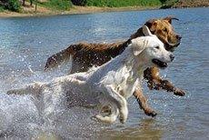 Спорт для собак