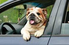 Памятка владельцу собаки,   уезжающему в отпуск