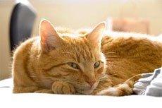 Научный подход к кастрации кошек и собак
