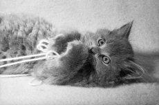 Эндопаразиты у собак и кошек