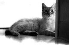 Эозинофильная гранулема — проявление аллергии у кошек