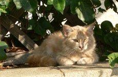 Ишемическая болезнь сердца у собак и кошек