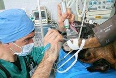 Консультация ведущего анестезиолога-реаниматолога - новая услуга