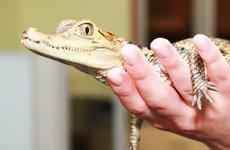 Опасности для рептилий