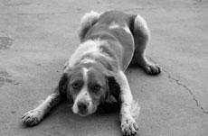 Отравление у собак и кошек. Причины и первая помощь.