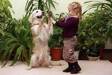 Собака и ребёнок. Как избежать конфликтов.