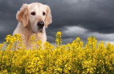 Операции на сердце у собак