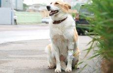 Воспитание городской собаки