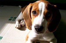 Что делать если животное переболело или погибло от вирусной инфекции