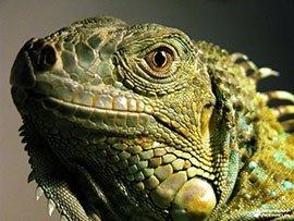 Основные ошибки при содержании рептилий в домашних условиях