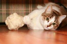 Ринотрахеит кошек