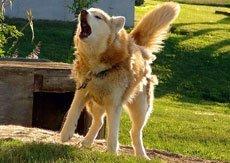 Поведение с незнакомой собакой