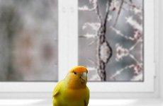 Помощь замерзшей птице