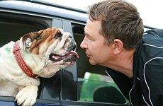 Если от Вашей собаки или кошки плохо пахнет.
