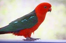 Простуда и воспаление у птиц.