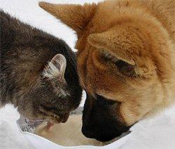 Уремия у собак и кошек