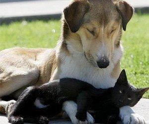Цирроз печени у собак и кошек