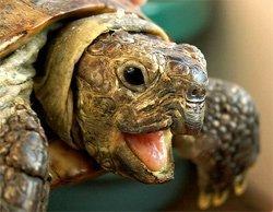Сухие корма для черепах