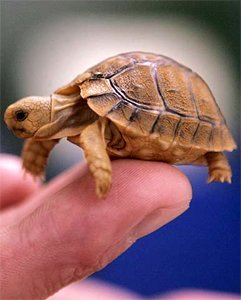 Трещины на панцире у черепах