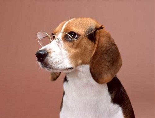 Дилатационная кардиомиопатия (ДКМП) у собак