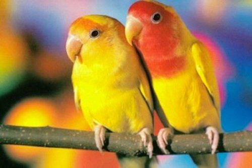 попугаи фотографии.
