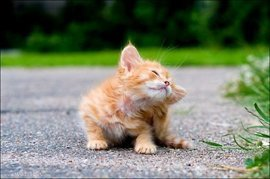 Дерматит у кошек и собак