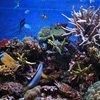 Устройство аквариума