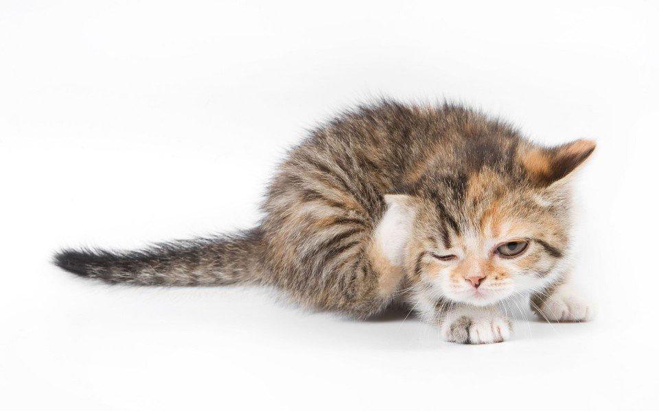 Вызов ветеринарного врача-дерматолога на дом