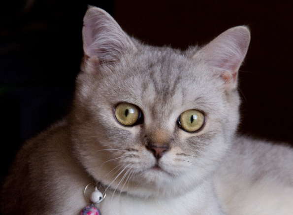 Течка кошек и их состояние