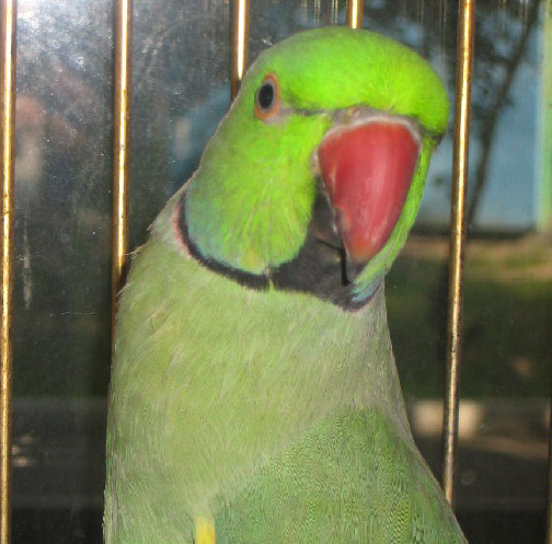 фото и породы попугаев