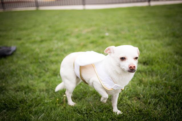 Собака после резекции суставов на двух конечностях восстановление контрактура сустава причины