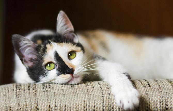 Гипергликемия у собак и кошек – причины, симптомы, лечение - ВЦ ...