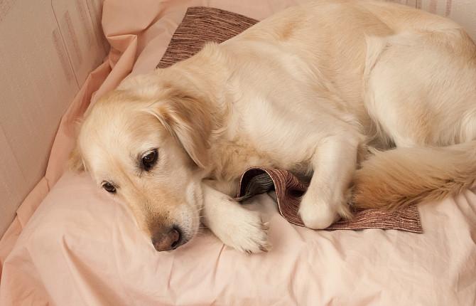 Ветеринарная медицина температура тела у диких животных цены выездные циклы медицина