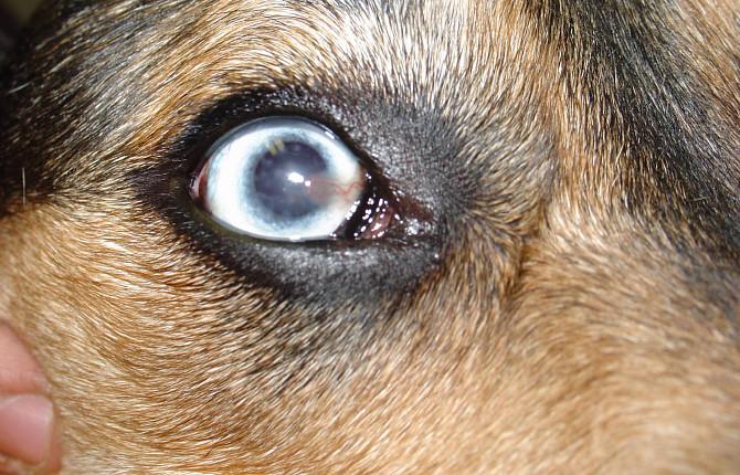Кератит у кошек и собак - симптомы, диагностика, лечение - ВЦ «Зоовет»