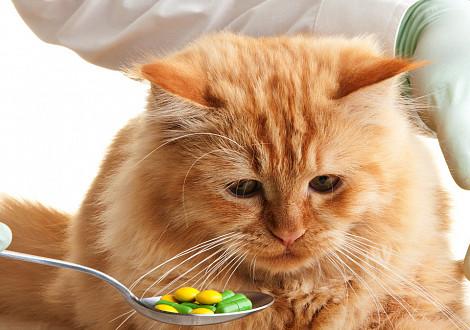 При каких заболеваниях применяется в ветеринарии