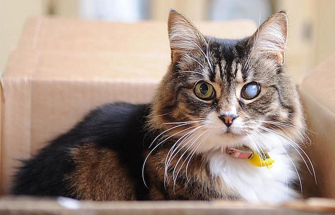Глаукома у собак и кошек, лечение, причины, диагностика - ВЦ «Зоовет»
