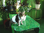 Последняя стадия рака у кошки сколько проживет