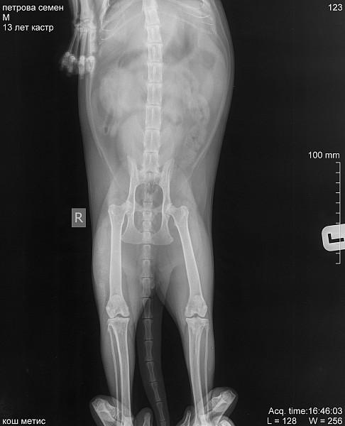 vânătăi în picioare dureri articulare articulațiile doare ceea ce ajută unguentele