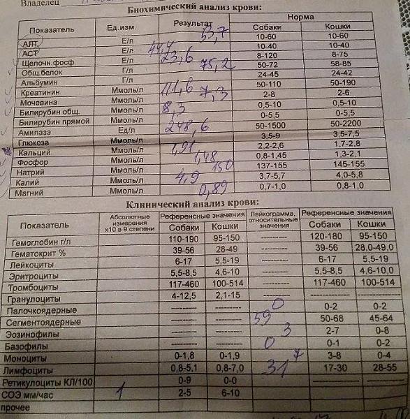 Крови собаки биохимии новосибирск анализ отит прививка пневмония менингит