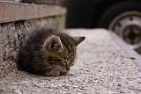 5d72efd377791a06427fb35694cbf001 - Не хочу кастрировать кота как быть