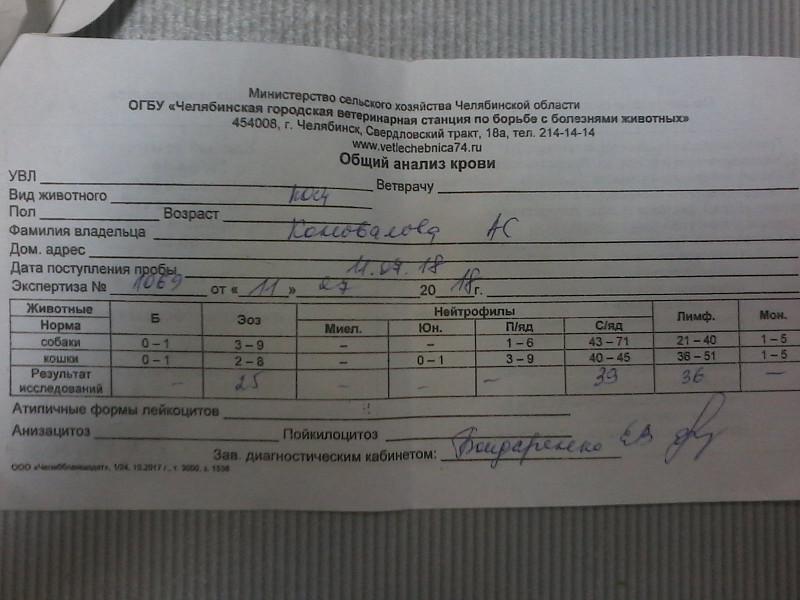 83 креатинин анализ крови рэа крови анализе норма в